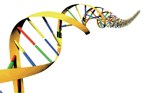 Image Result For Who Are The Two Scientist That The Structure Of Dna